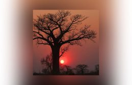 solstice, baobab, sunset