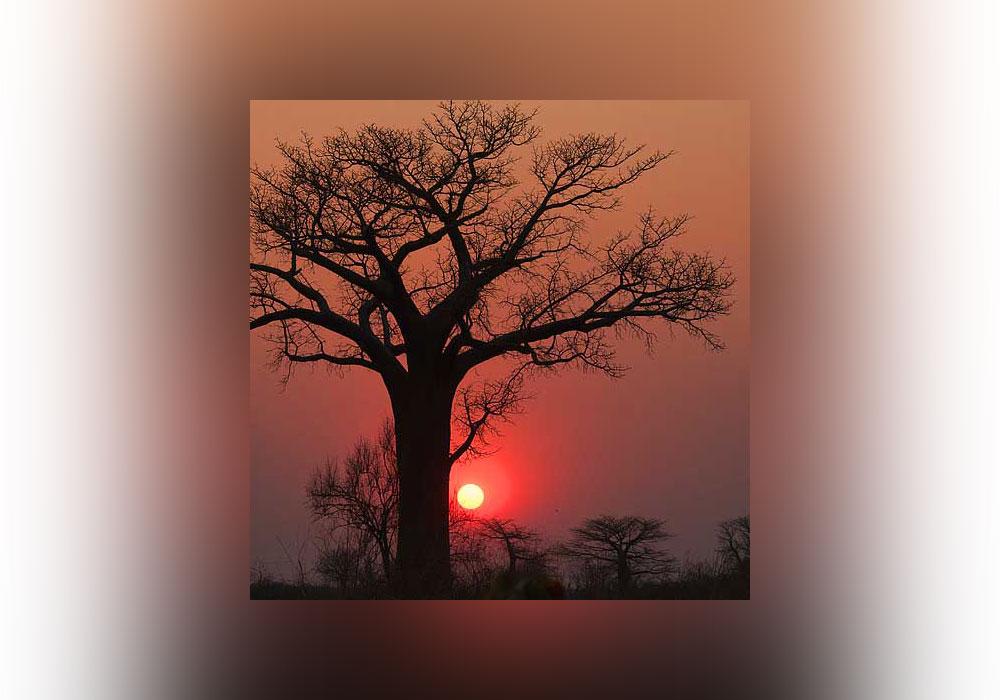 solstice, baobab, sunset